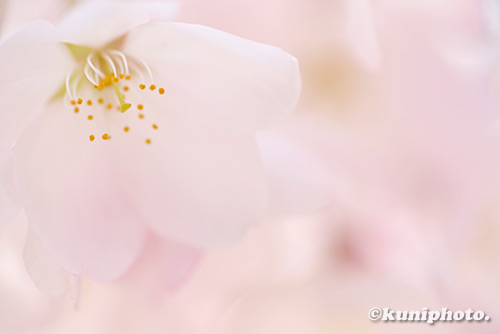 0329_180328_kyoto_017