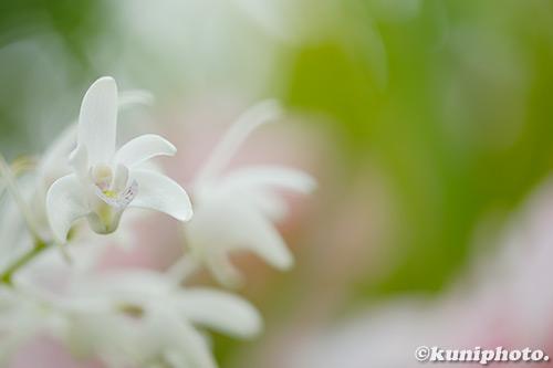 190227_konohana_017_XT3