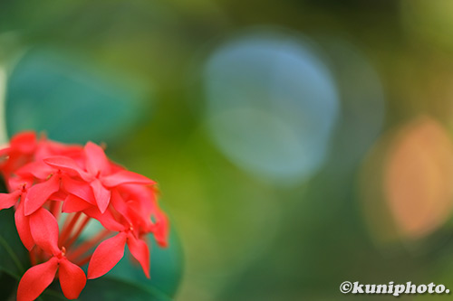 190302_konohana_049_XT3