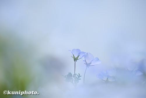 180422_tsurumi_0004