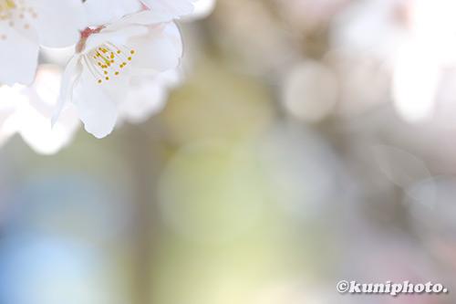 190404_kyoto_047_XT3