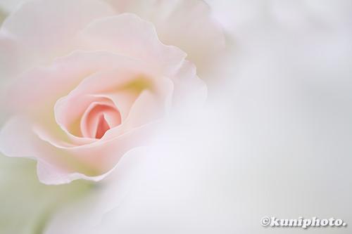 190518_nakanoshima_007_XT3