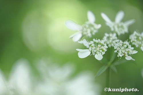 190522_tsurumi_068_XT3