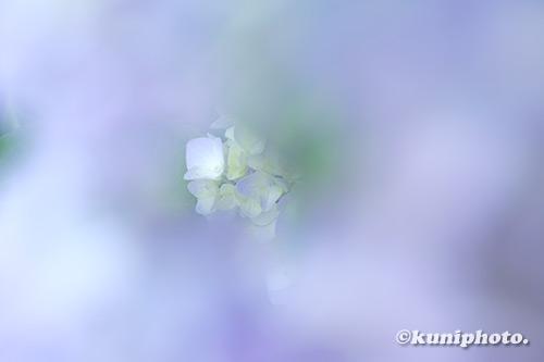 190605_hattori_502_XT3