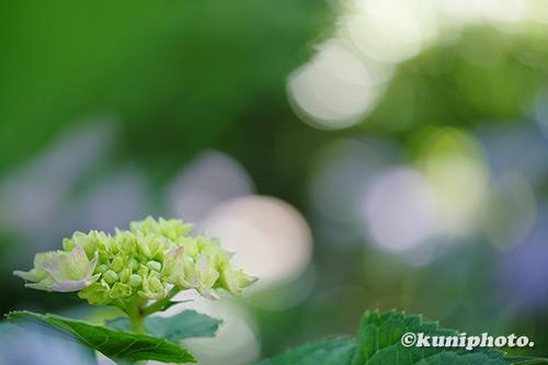 190612_maishima_551_XT3