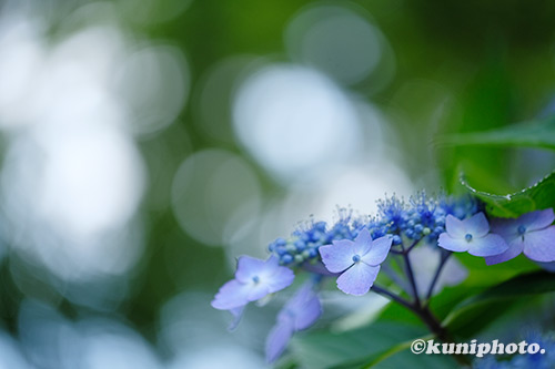 190613_tsurumi_555_XT3