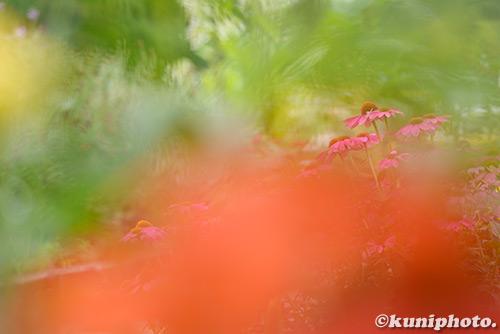 180621_kyoto_027