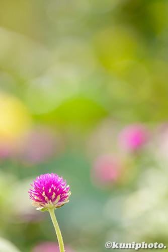 180830_kyoto_367