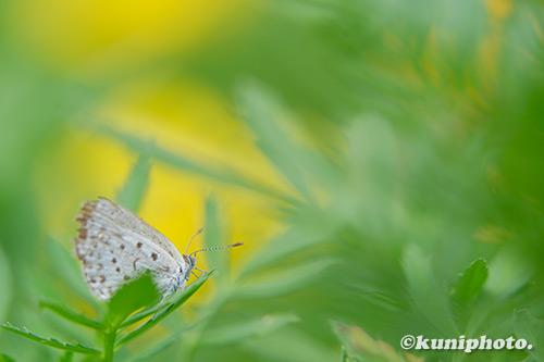 190904_tsurumi_479_XT3