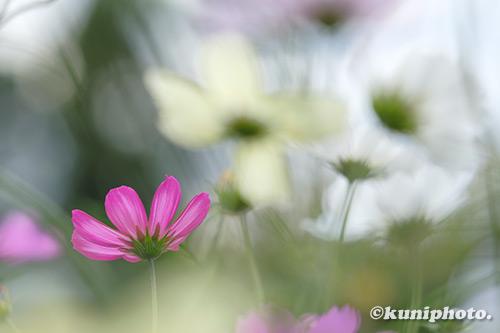 191126_kyoto_465_XH1