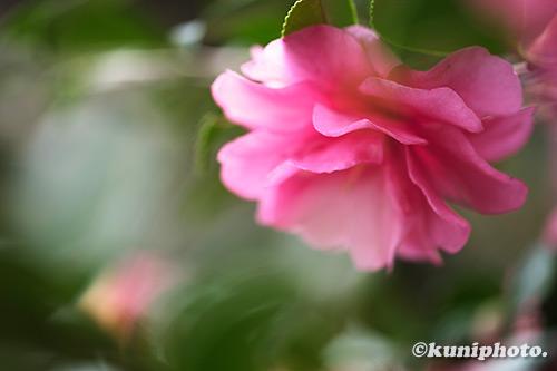 1206_191126_kyoto_023_XH1