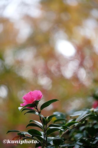 1209_191126_kyoto_025_XH1