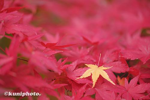 191126_kyoto_043_XH1
