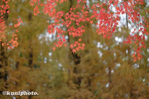 191126_kyoto_048_XH1