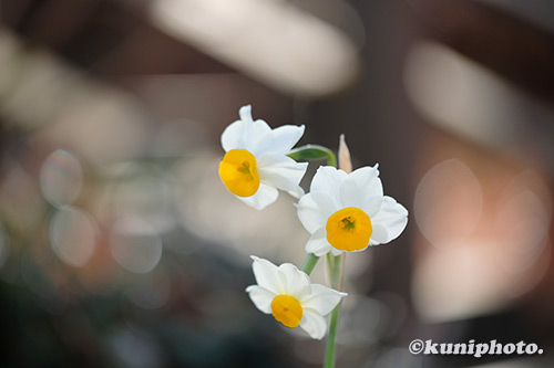 200105_hattori_005_XH1