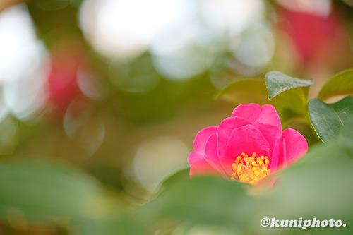 200125_banpaku_003_XH1