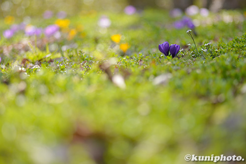 180304_kyoto_196