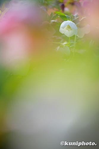 190324_nagai_501_XT3