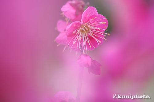 200210_banpaku_384_XH1