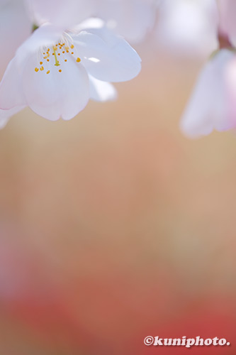 190404_kyoto_146_XT3