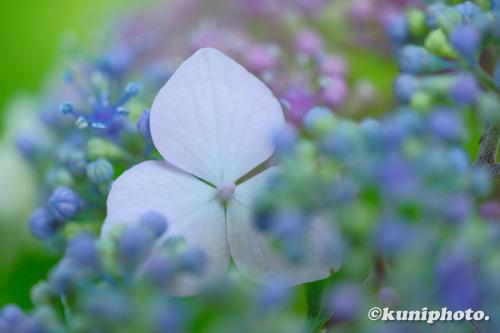 200527_hattori_200_XH1