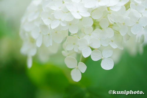 200609_tsurumi_280_XH1