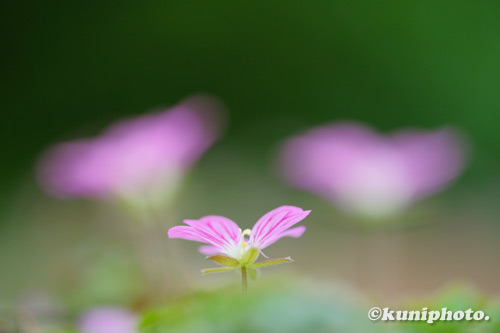 200715_tsurumi_093_XH1