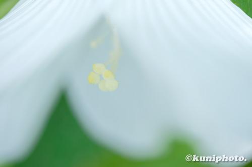200801_banpaku_181_XH1