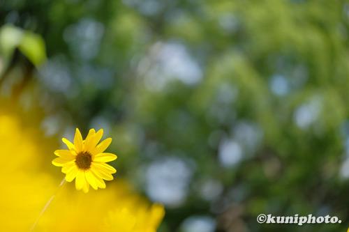 200801_banpaku_220_XH1