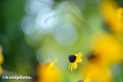 200819_kyoto_487_XH1