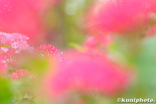 180915_tsurumi_415