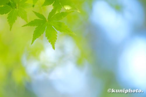200902_hattori_090_XH1