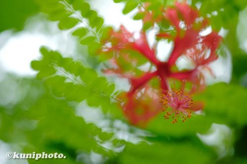 200910_hattori_045_XH1