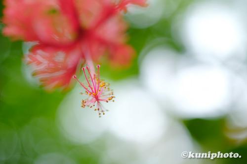 200910_hattori_060_XH1