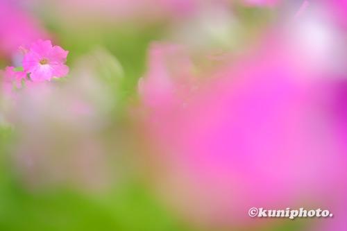 200927_tsurumi_025_XH1