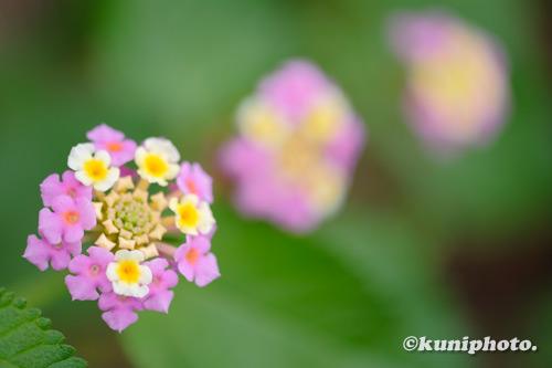 201003_shinkansen_167_XH1