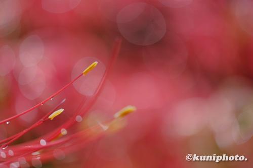 201010_hattori_045_XH1