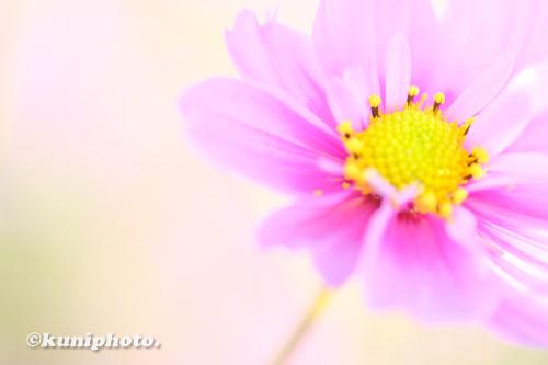 1106_201106_tsurumi_198_XH1