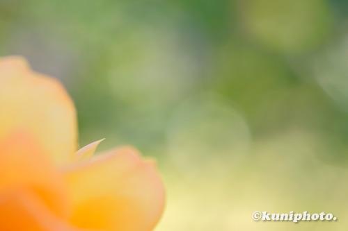 201027_banpaku_343_XH1