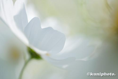 201103_banpaku_007_XH1