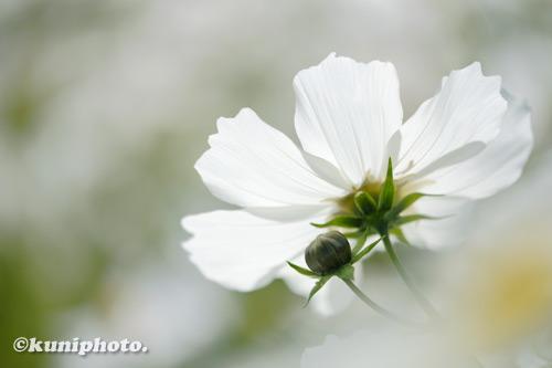 201103_banpaku_091_XH1