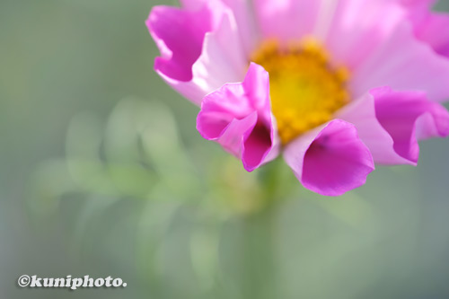 201106_tsurumi_026_XH1