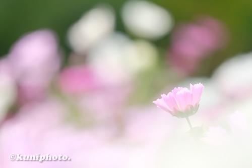201106_tsurumi_046_XH1