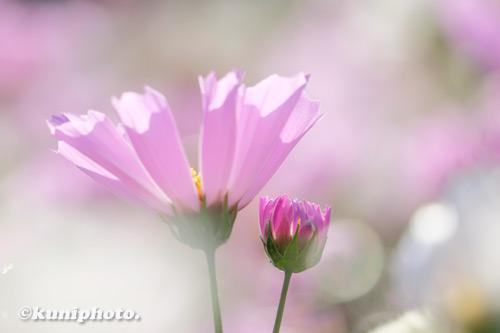 201106_tsurumi_074_XH1