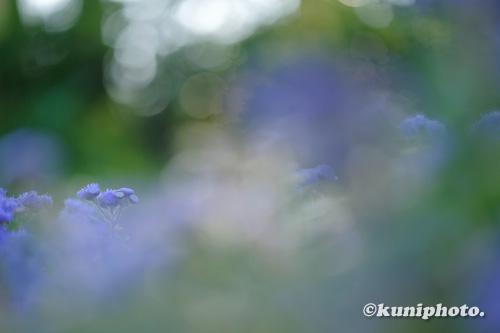 201108_tsurumi_011_XH1