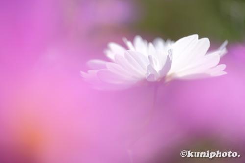 201108_tsurumi_042_XH1