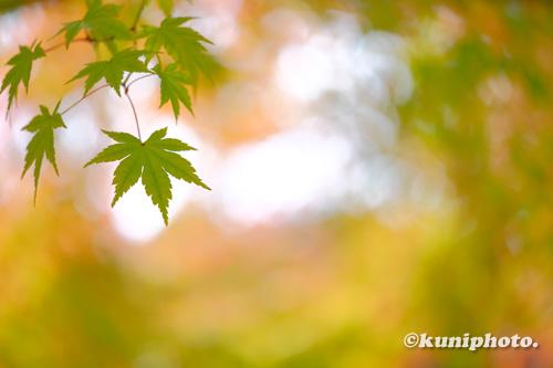 201112_tsurumi_023_XH1