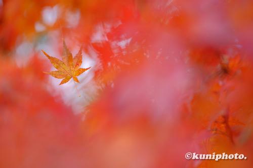 201120_banpaku_050_XH1
