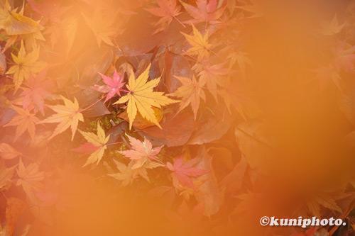 201120_banpaku_127_XH1