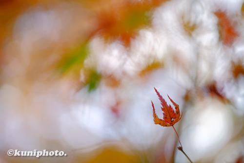 201122_banpaku_005_XH1